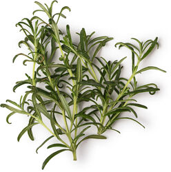 Fresh Rosemary Infusion