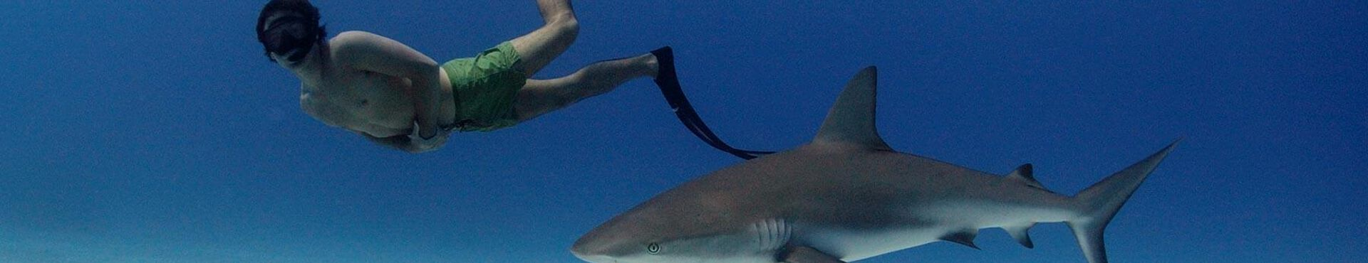 Banner - Save Sharks