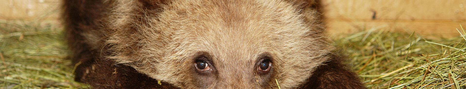 Banner - Northern Lights Wildlife Society