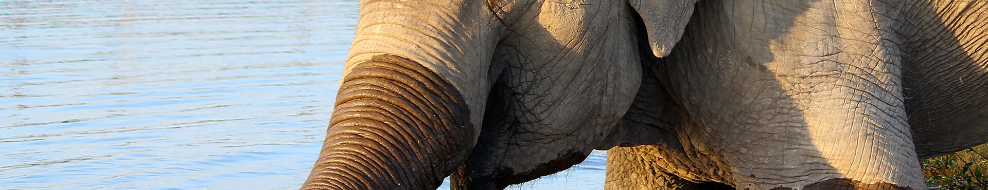 Banner - Elephant Sanctuary Brazil