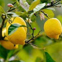 What Does Citrus Do for My Skin and Hair?