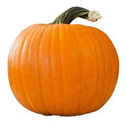Pumpkin puree (Cucurbita pepo)