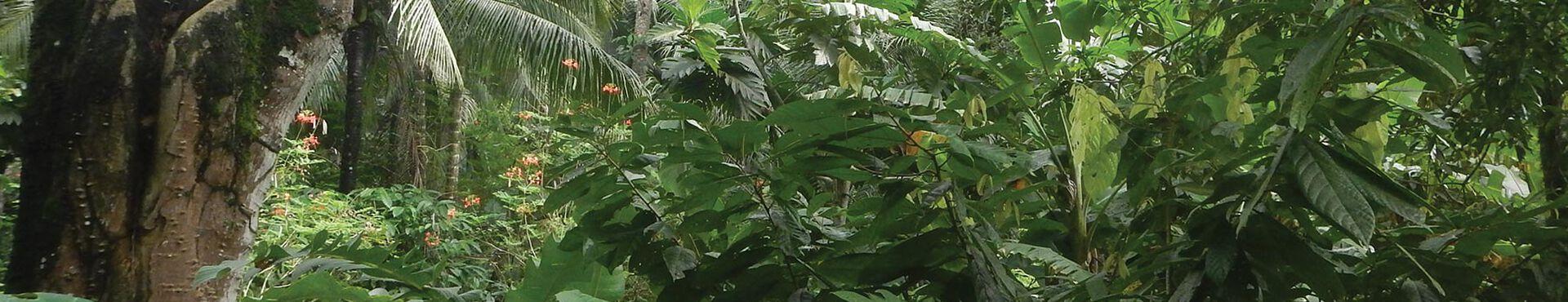 Banner - Maya Mountain Research Farm