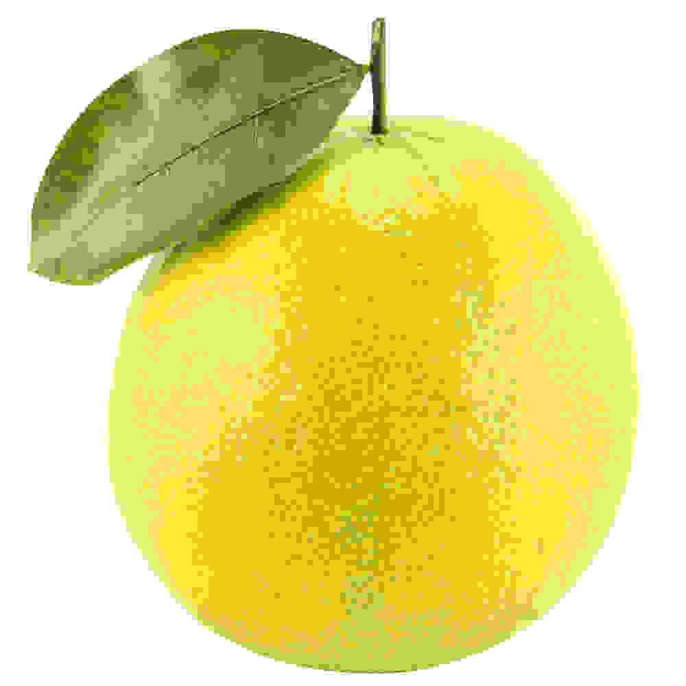 Bergamot Oil (Citrus bergamia)