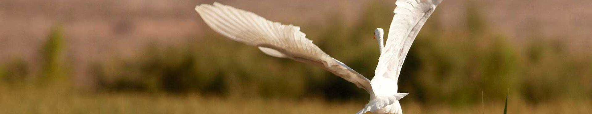 Banner - Desert Wetlands Conservancy
