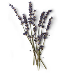 French Lavender Oil (Lavandula Angustifolia)