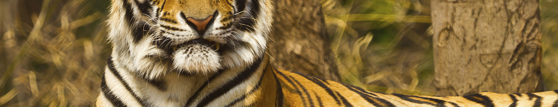 Banner - Global Federation of Animal Sanctuaries
