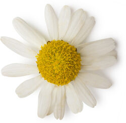 Chamomile and Marigold Petal Extract