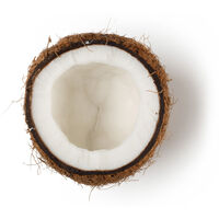 Ground Coconut Shell