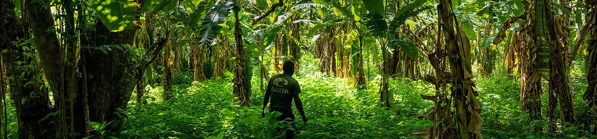Banner - Cultivating Flourishing Ecosystems in Uganda