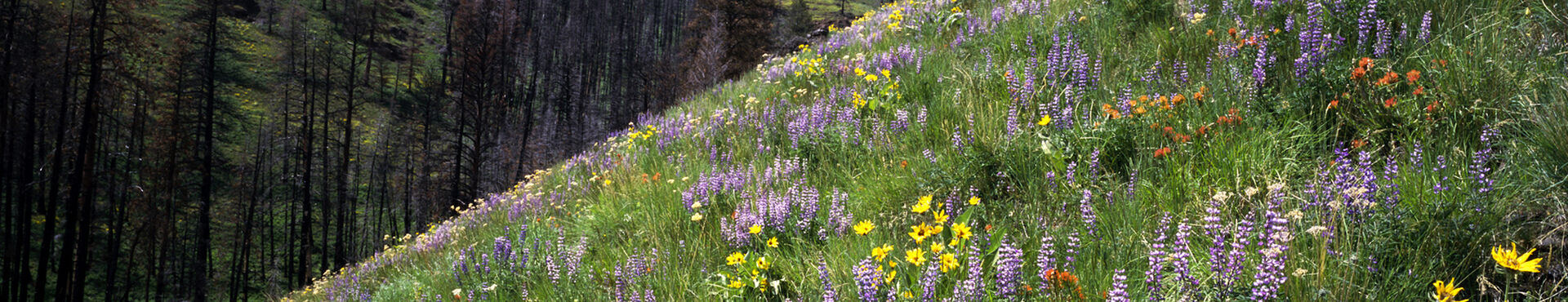 Banner - Cascadia Wildlands