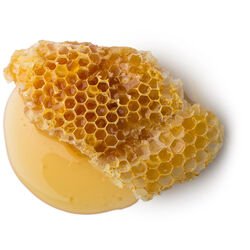 Honeycomb (Beeswax)