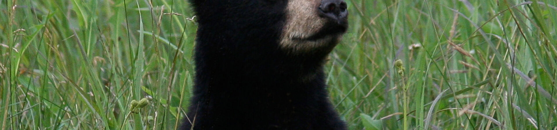Banner - Stop The Florida Bear Hunt