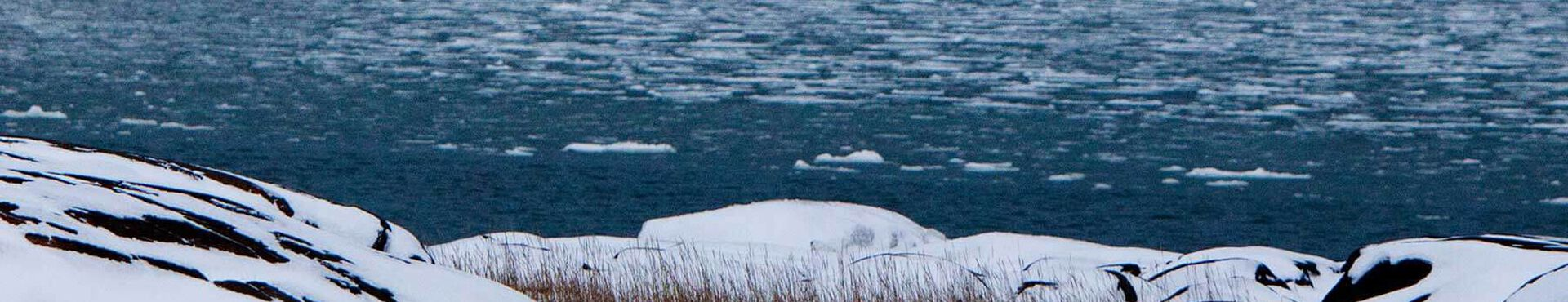 Banner - An Update on Our Seal Hunt Campaign