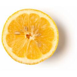 Fresh Organic Lemon Infusion