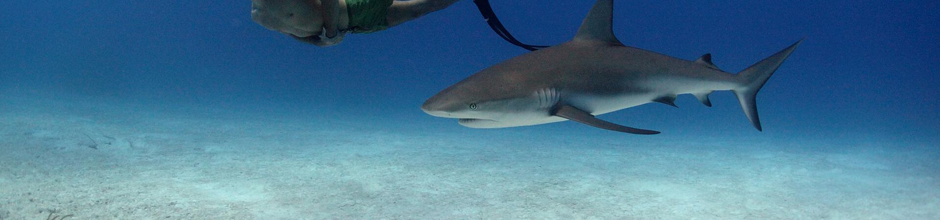 Banner - From Sharkwater to Fin Free