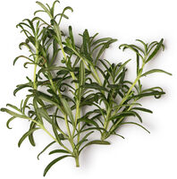 Fresh Rosemary Infusion