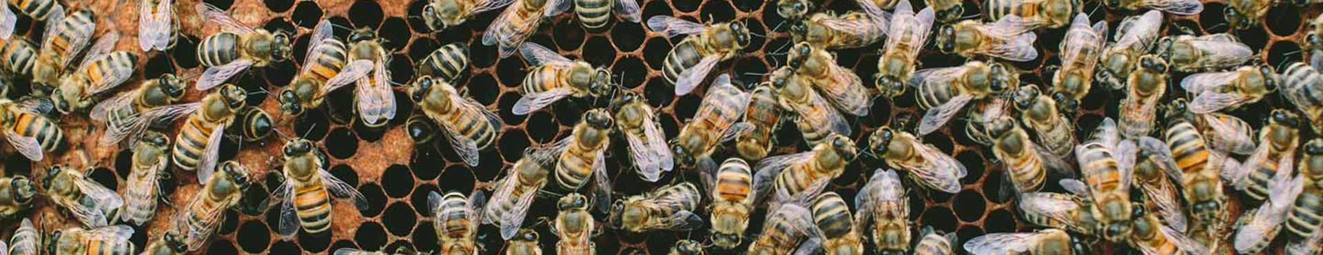 Banner - The Buzz About World Bee Day