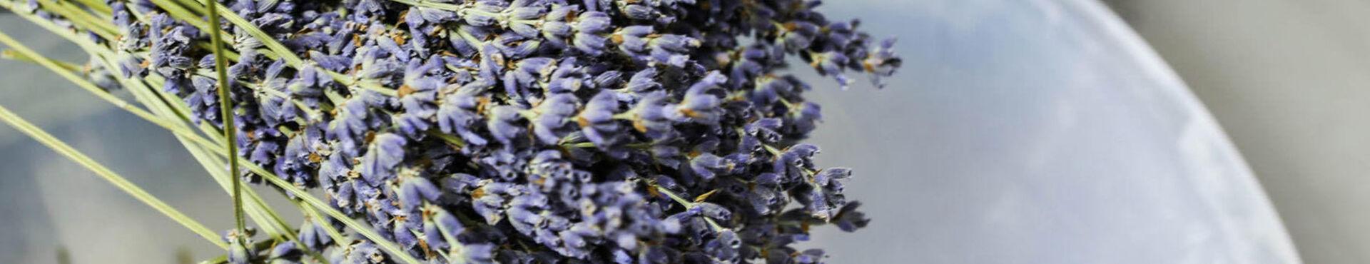 Banner - Lavender: Under French Skies