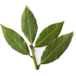 Bay Leaf Infusion