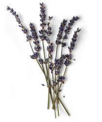 Lavender Flower Infusion