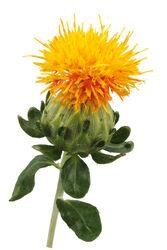 Safflower Petal Extract