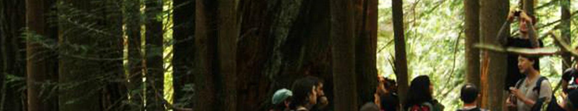 Banner - Ancient Forest Alliance