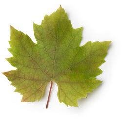 Vine Leaf Infusion