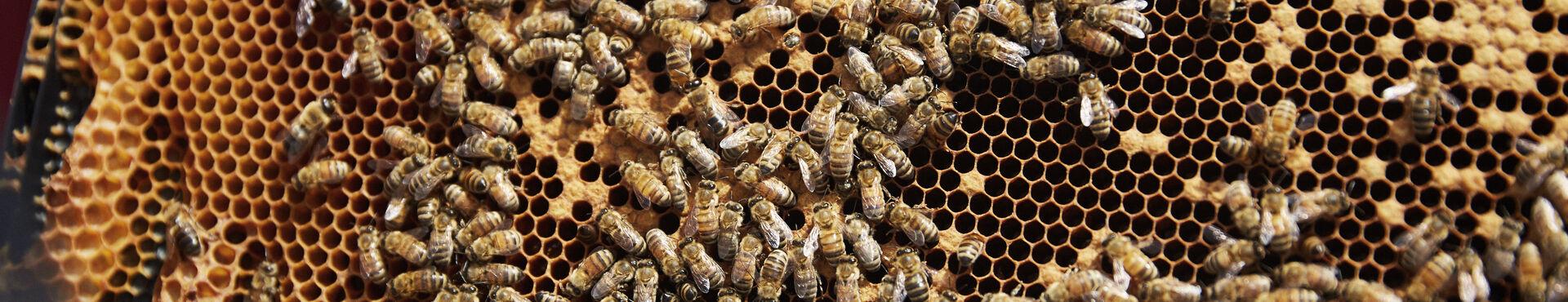 Banner - Why We Use Honey