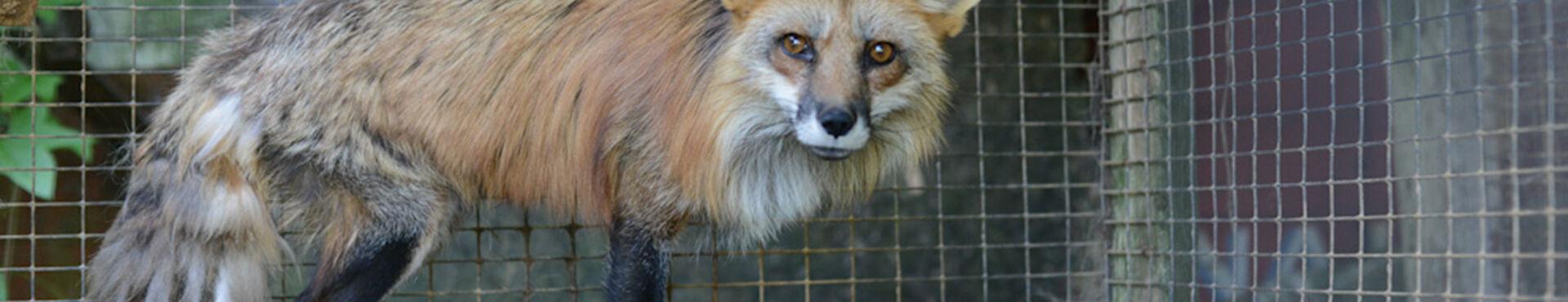 Banner - Investigating Animal Cruelty