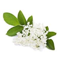 Elderflower Infusion