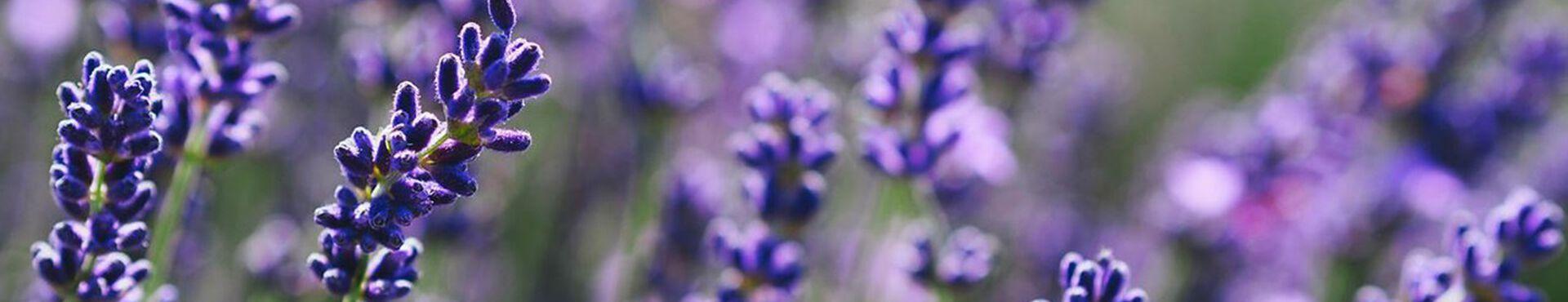 Banner - Ingredients in Bloom