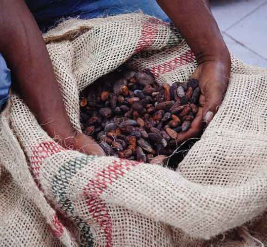 Discover how our cocoa makes a difference.
