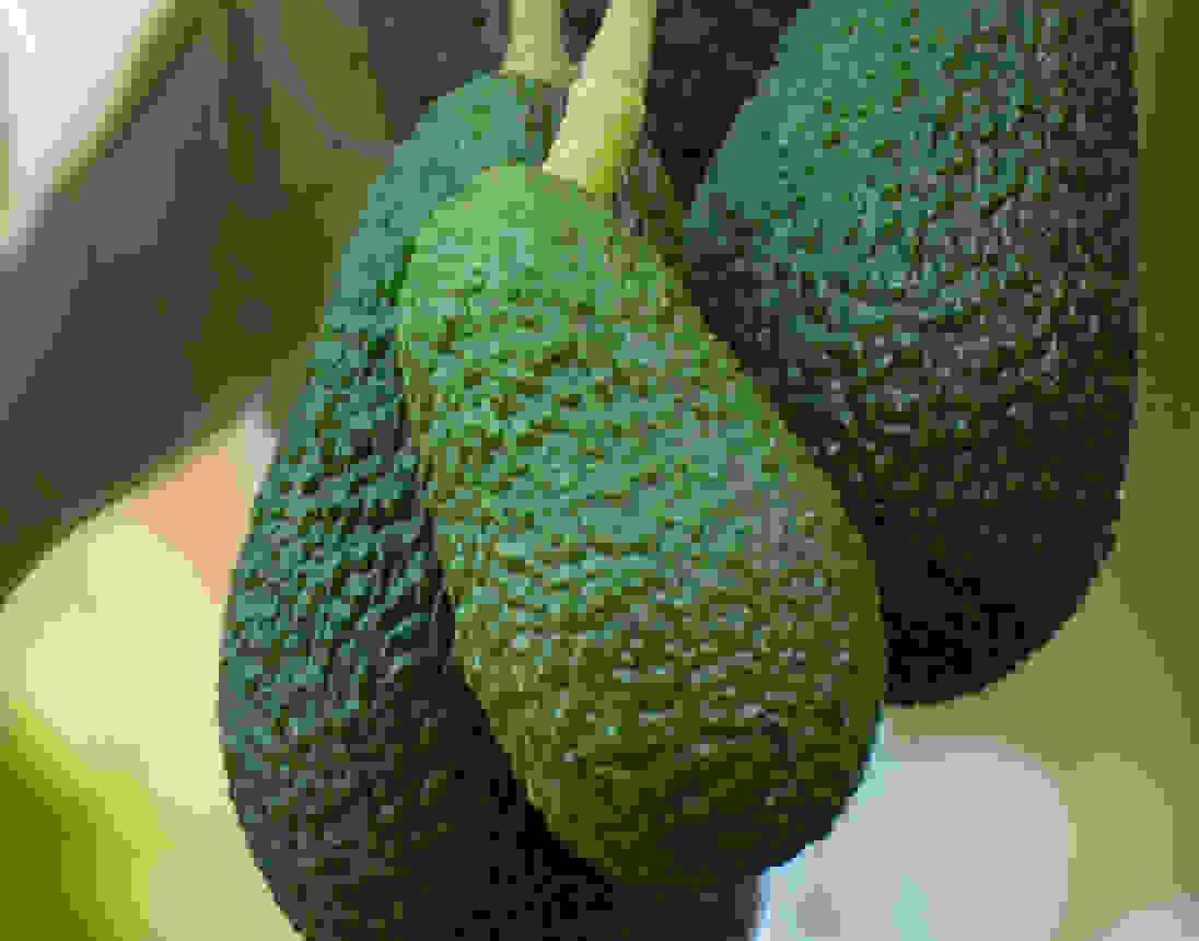 avocado hydrating benefits