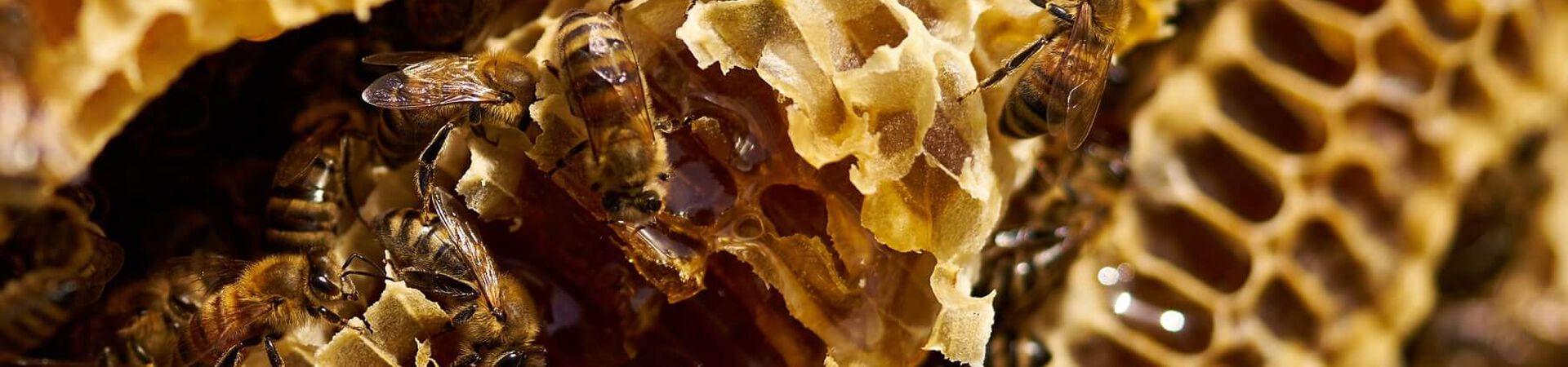 Banner - Honey's Sweet Effects