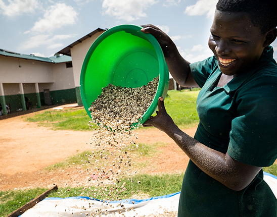 A person in a green frock empties a bowl of moringa seeds from up high, letting them drop into an unseen vessel below.