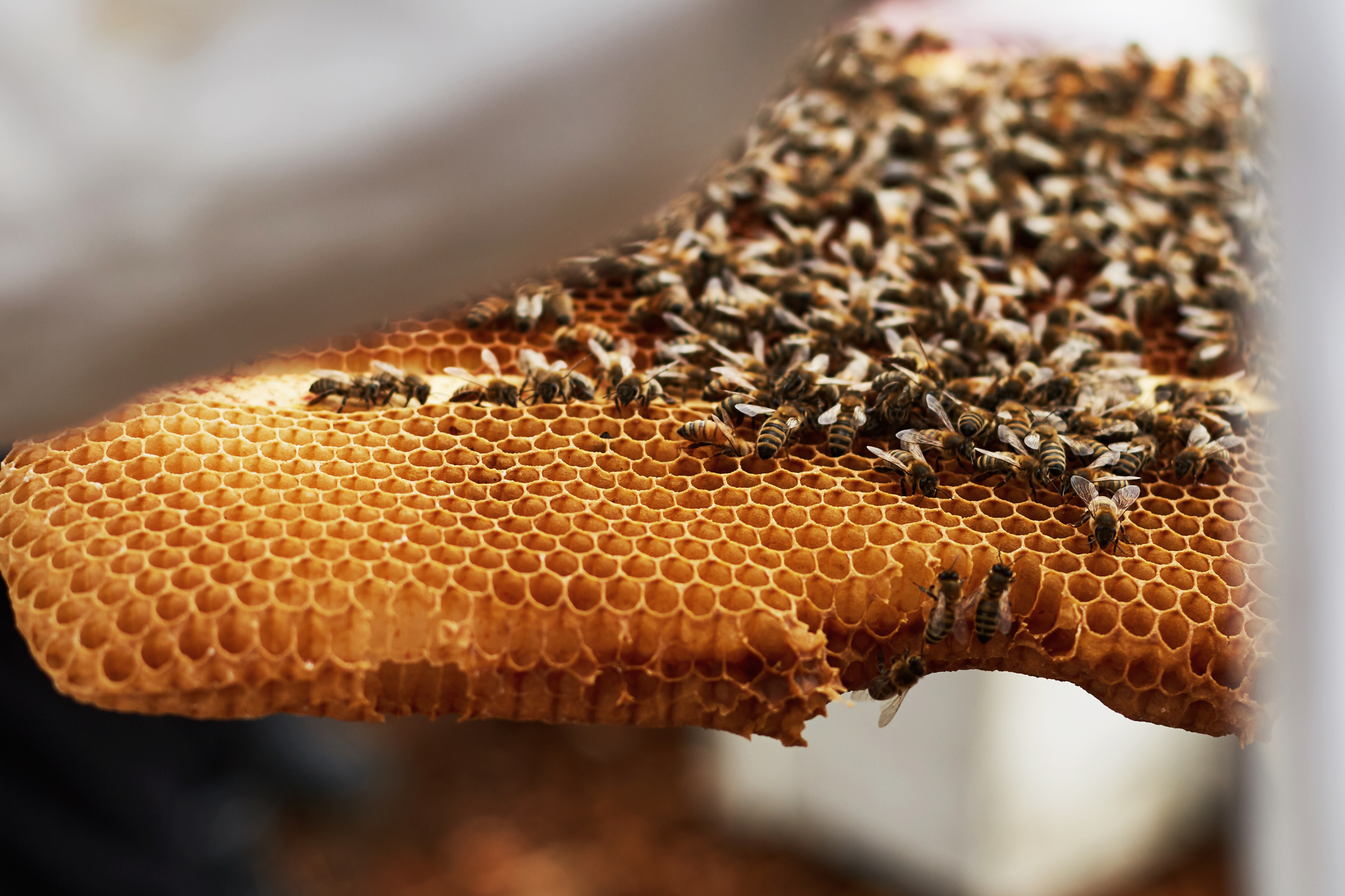 A close up of bees sitting on a honeycomb.