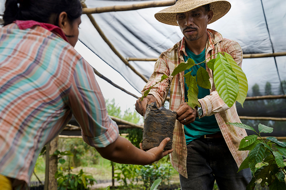 Two farmers inside a greenhouse with one farmer passing a sapling to the other farmer.