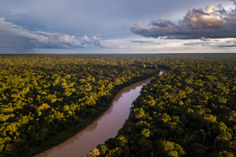 An aerial view of the rainforest showcases the forest with a river running through its middle.