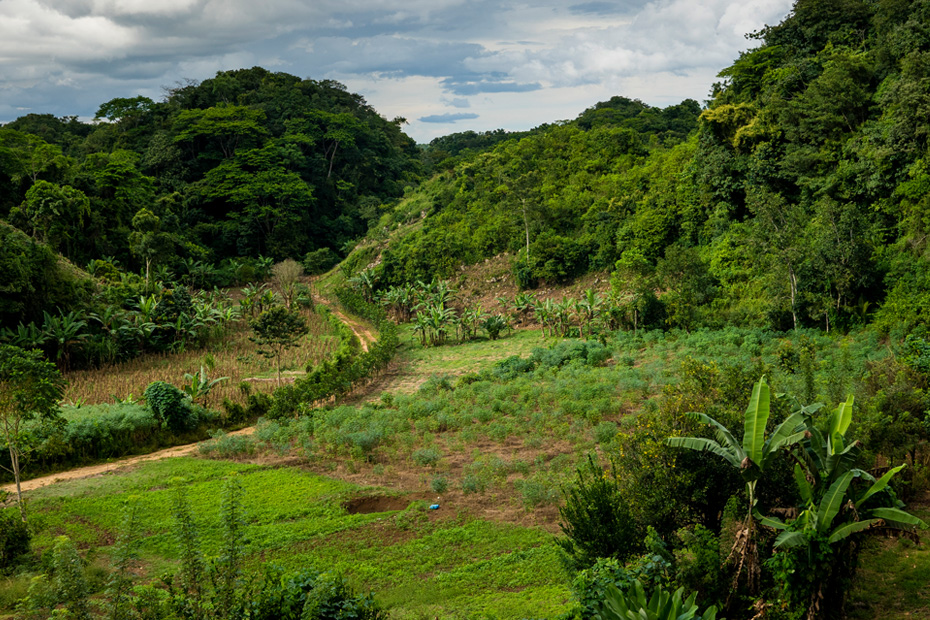 A landscape shot of a lush, green forested area in Guatemala with blue sky in the background.