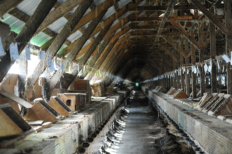 Inside a fur farm