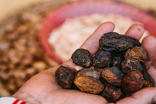 The dried fruit of the argan tree